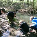 Waldprojekttage in Lobeda_Turboschnecken auf der Suche nach Wassertieren