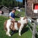 PJ Herausforderung 2017: David verbrachte die drei Wochen auf einem Hof in den Alpen