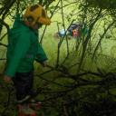 Im Buschwerk