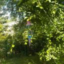 Zuckertütenbaumbill