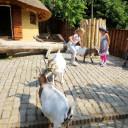 Tierpark Schwabenhaus Teichhühner