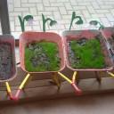 PJ im BiLLY_Pflanzen sind gesäht