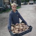 Kartoffelprojekt Kieselsteine