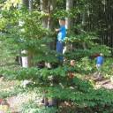 Wald 2018 14